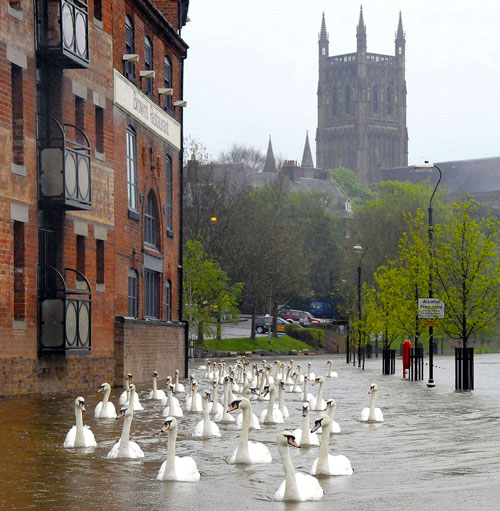 Lovely weather for ducks (or swans). Not so great for greenery though.